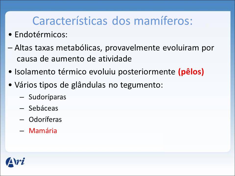 Características dos mamíferos: Endotérmicos: – Altas taxas metabólicas, provavelmente evoluiram por causa de aumento de atividade Isolamento térmico e