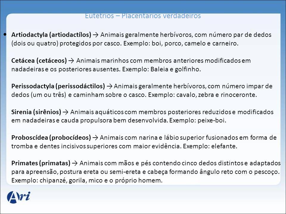Eutétrios – Placentários verdadeiros Artiodactyla (artiodactílos) Animais geralmente herbívoros, com número par de dedos (dois ou quatro) protegidos p