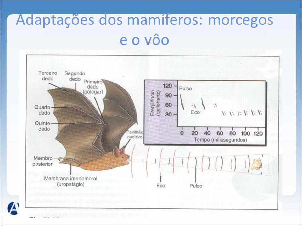 Adaptações dos mamíferos: morcegos e o vôo