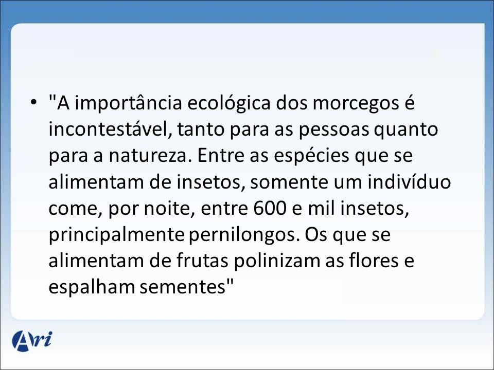 A importância ecológica dos morcegos é incontestável, tanto para as pessoas quanto para a natureza.
