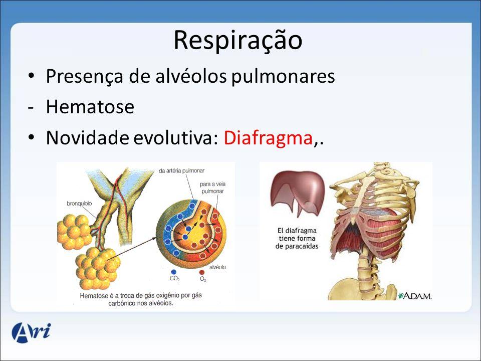 Respiração Presença de alvéolos pulmonares -Hematose Novidade evolutiva: Diafragma,.