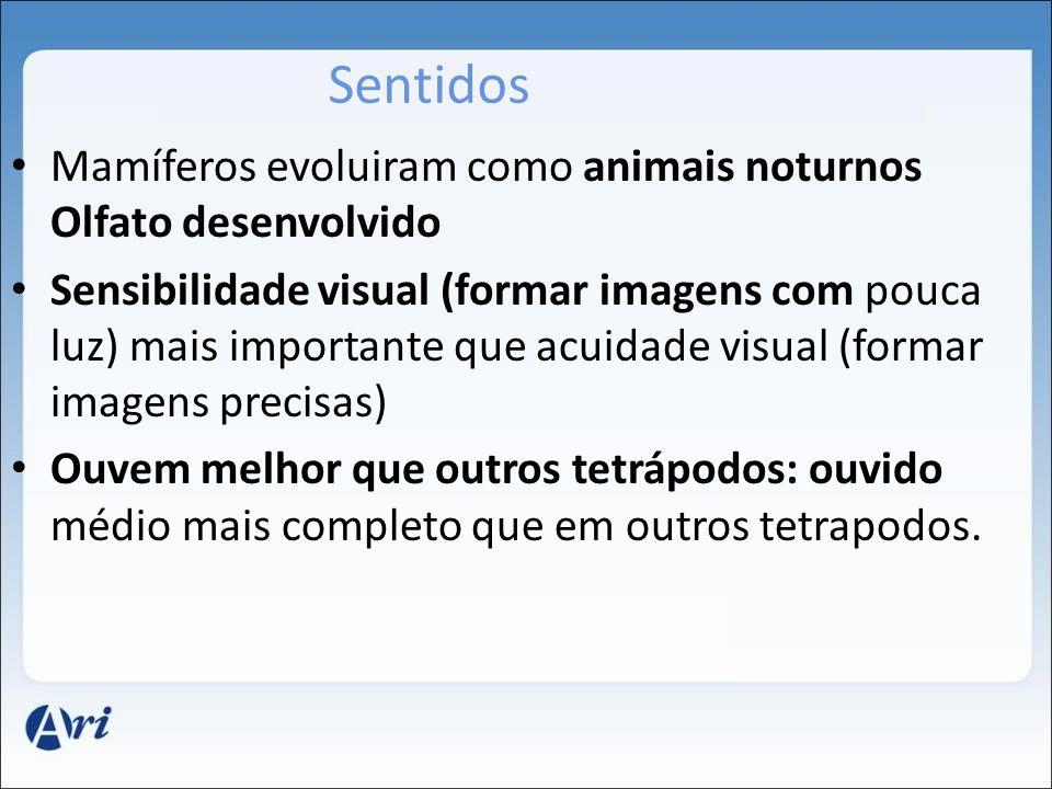 Sentidos Mamíferos evoluiram como animais noturnos Olfato desenvolvido Sensibilidade visual (formar imagens com pouca luz) mais importante que acuidad