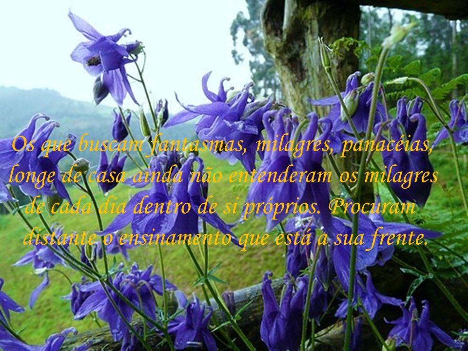 Se soubermos multiplicar veremos nas mãos de benfeitores amorosos o trabalho de Deus.