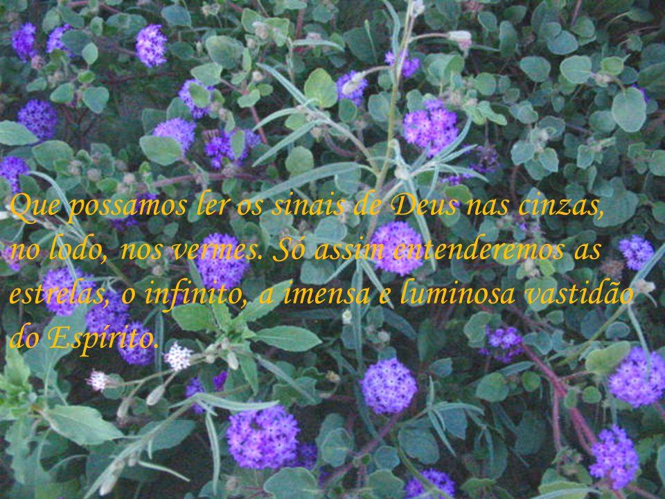 Mas é preciso que seus olhos vejam, sobretudo os detalhes mais pequeninos, pois neles Deus mostra a Sua gradiosidade e sabedoria.