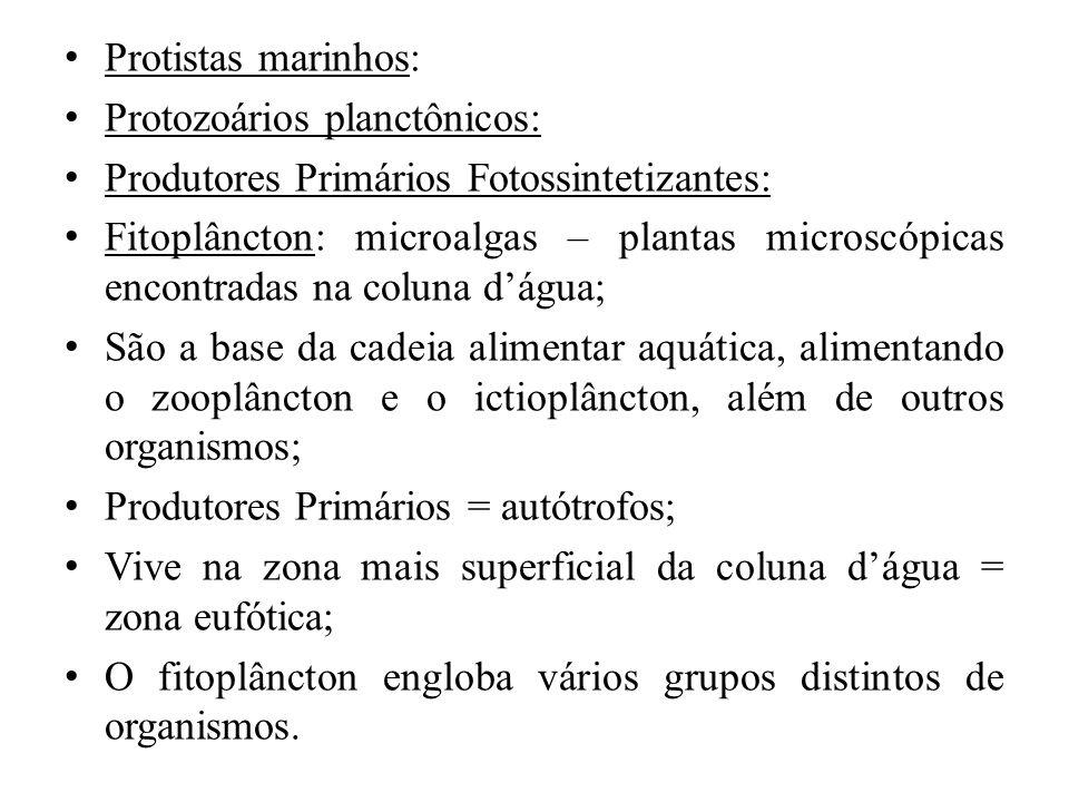Protistas marinhos: Protozoários planctônicos: Produtores Primários Fotossintetizantes: Fitoplâncton: microalgas – plantas microscópicas encontradas n