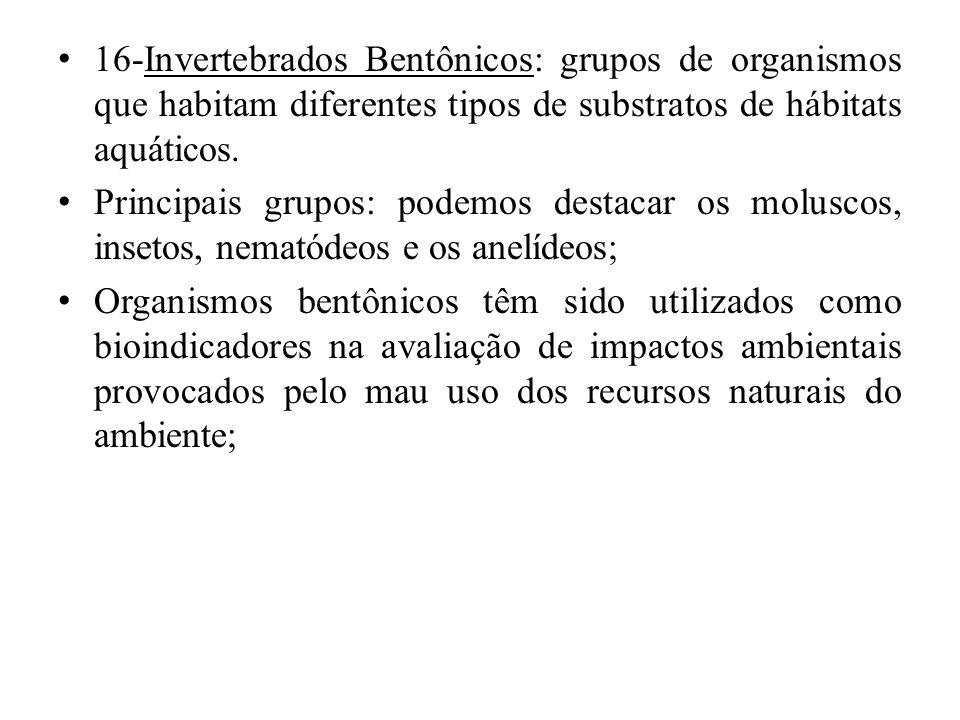 16-Invertebrados Bentônicos: grupos de organismos que habitam diferentes tipos de substratos de hábitats aquáticos. Principais grupos: podemos destaca