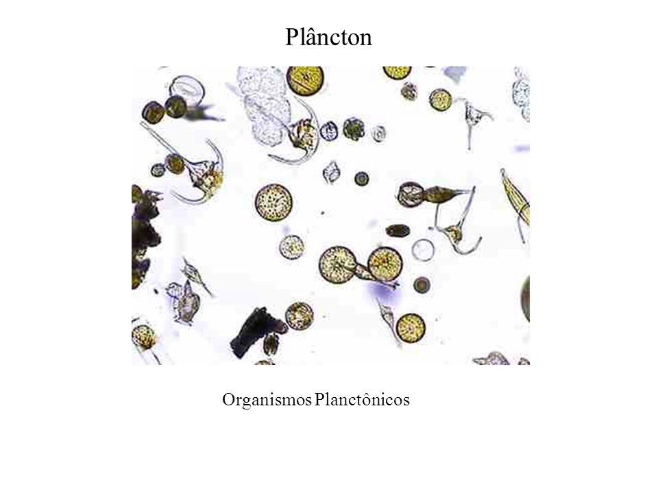 Plâncton Organismos Planctônicos