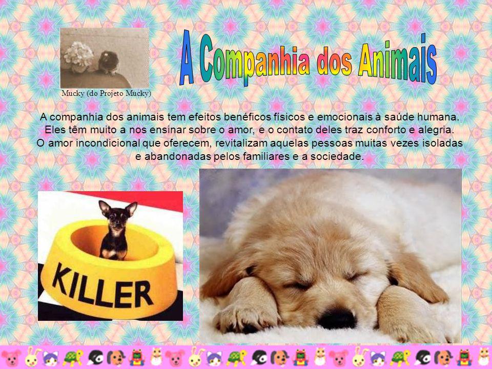 A companhia dos animais tem efeitos benéficos físicos e emocionais à saúde humana.