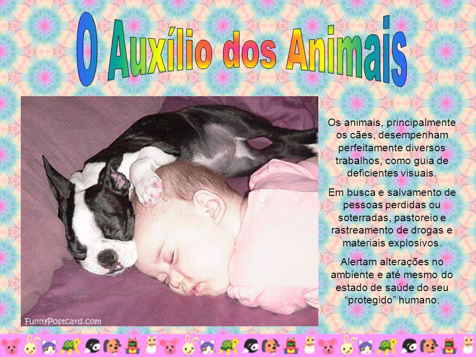 Os animais, principalmente os cães, desempenham perfeitamente diversos trabalhos, como guia de deficientes visuais.