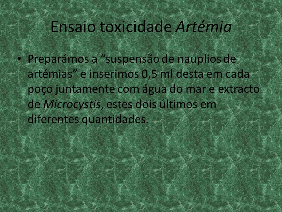 Ensaio toxicidade Artémia Preparámos a suspensão de nauplios de artémias e inserimos 0,5 ml desta em cada poço juntamente com água do mar e extracto d