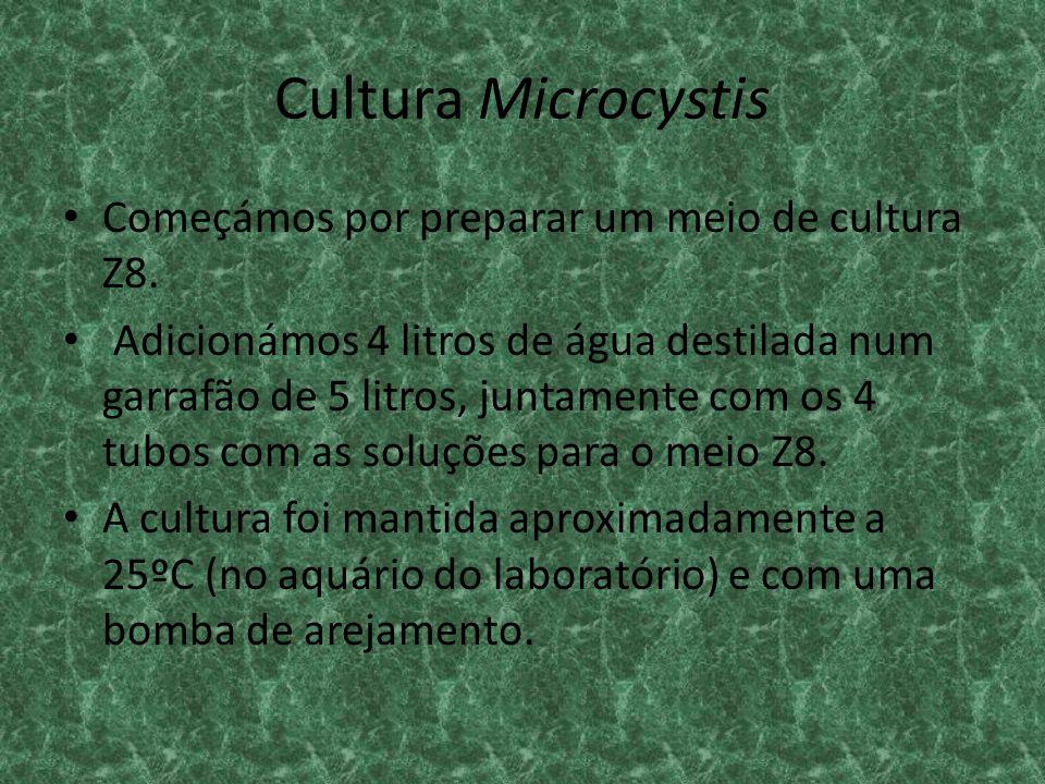 Cultura Microcystis Começámos por preparar um meio de cultura Z8. Adicionámos 4 litros de água destilada num garrafão de 5 litros, juntamente com os 4