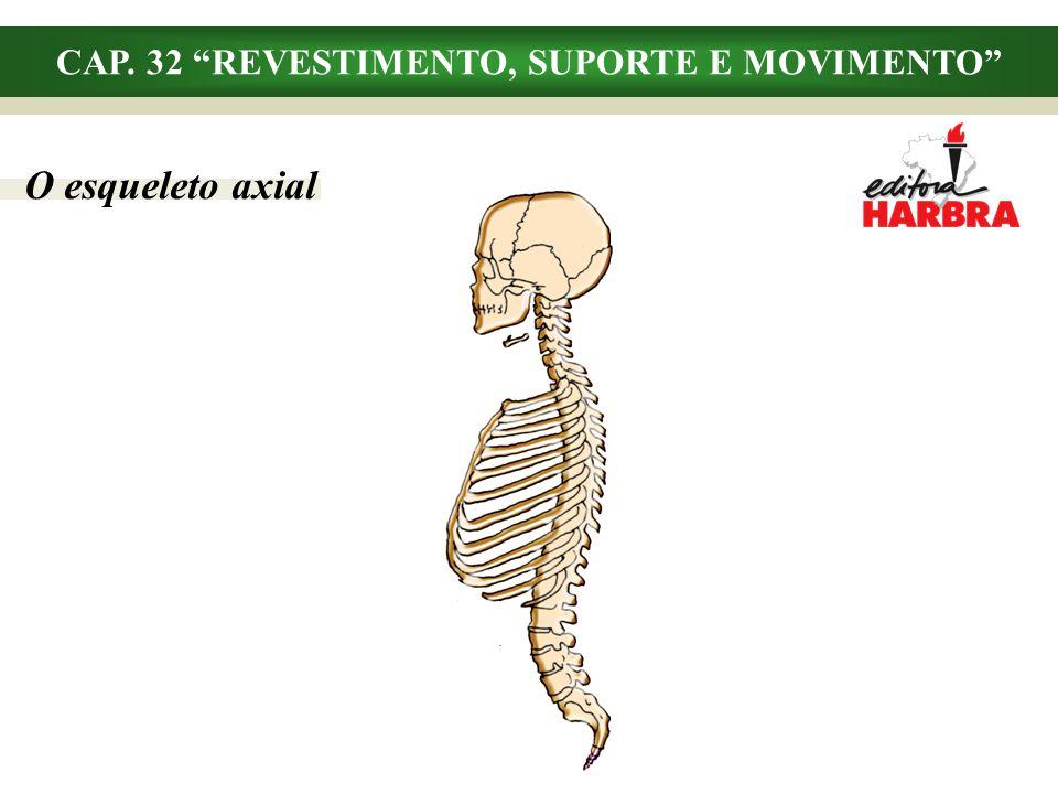 CAP. 32 REVESTIMENTO, SUPORTE E MOVIMENTO O esqueleto axial