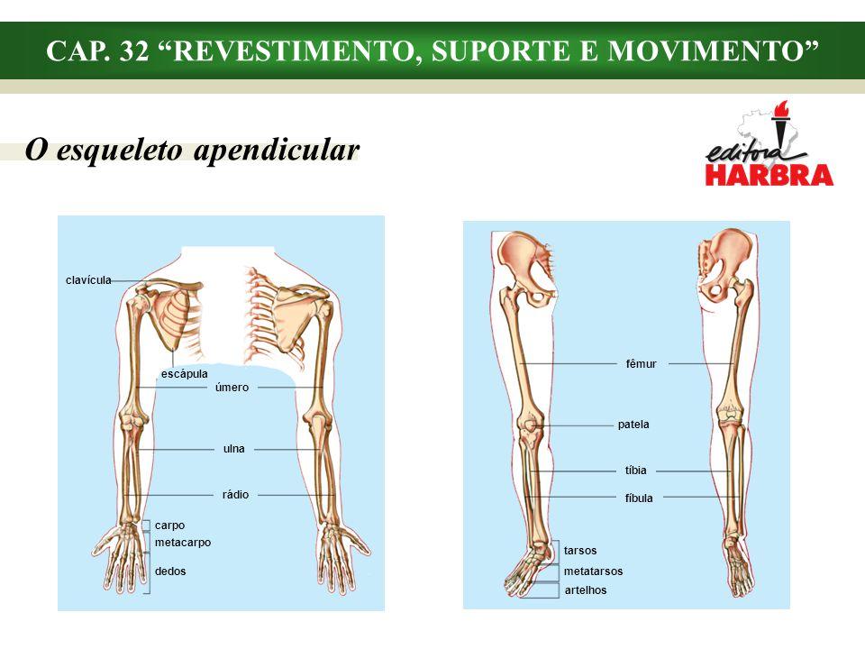 CAP. 32 REVESTIMENTO, SUPORTE E MOVIMENTO O esqueleto apendicular fêmur patela tíbia artelhos fíbula tarsos metatarsos clavícula úmero metacarpo ulna