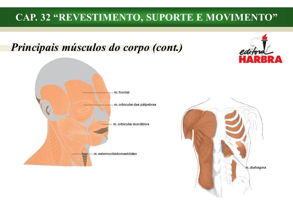 CAP. 32 REVESTIMENTO, SUPORTE E MOVIMENTO Principais músculos do corpo (cont.) m. diafragma m. frontal m. orbicular das pálpebras m. orbicular dos láb