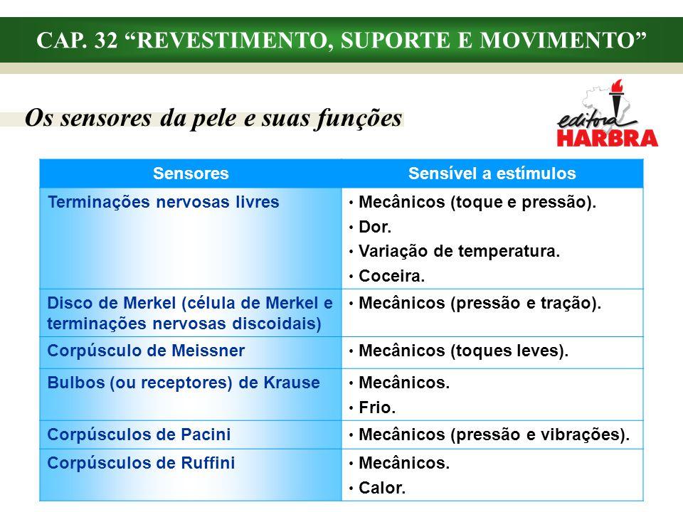 CAP. 32 REVESTIMENTO, SUPORTE E MOVIMENTO Os sensores da pele e suas funções SensoresSensível a estímulos Terminações nervosas livres Mecânicos (toque