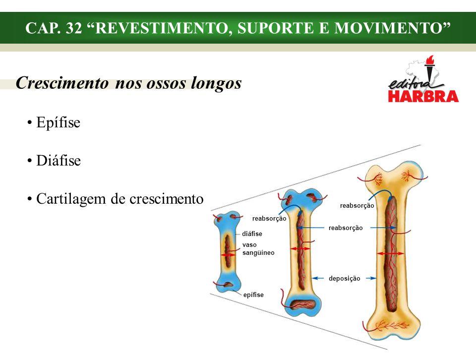 CAP. 32 REVESTIMENTO, SUPORTE E MOVIMENTO Crescimento nos ossos longos Epífise Diáfise Cartilagem de crescimento diáfise vaso sangüíneo epífise reabso