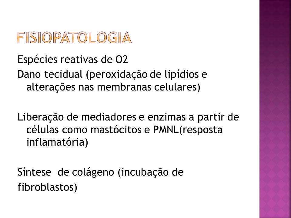 Espécies reativas de O2 Dano tecidual (peroxidação de lipídios e alterações nas membranas celulares) Liberação de mediadores e enzimas a partir de cél