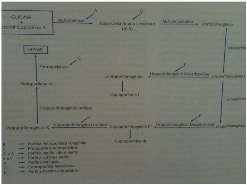 Constituinte celular essencial para vários processos metabólicos.