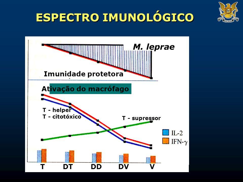 ESPECTRO IMUNOLÓGICO M. leprae Imunidade protetora Ativação do macrófago T - supressor T - helper T - citotóxico TDT DD DVV