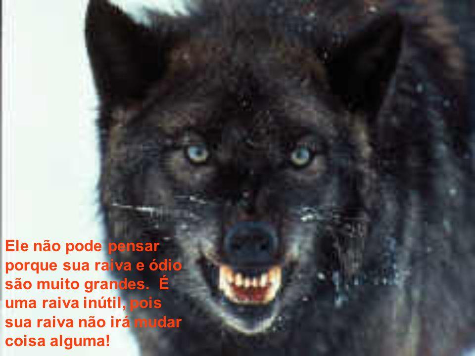 Mas, o outro lobo, ah!, este é cheio de raiva. Mesmo as pequeninas coisas o lançam num ataque de ira! Ele briga com todos, o tempo todo, sem qualquer