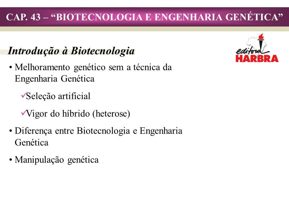 CAP. 43 – BIOTECNOLOGIA E ENGENHARIA GENÉTICA Melhoramento genético sem a técnica da Engenharia Genética Seleção artificial Vigor do híbrido (heterose