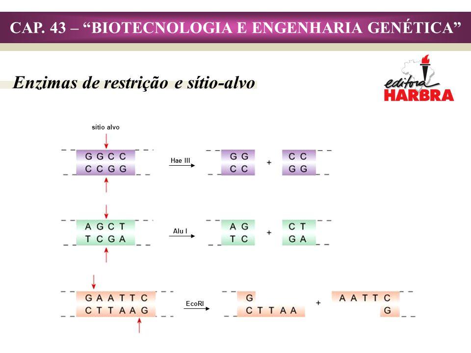 CAP. 43 – BIOTECNOLOGIA E ENGENHARIA GENÉTICA Enzimas de restrição e sítio-alvo sítio alvo Hae III Alu I EcoRI