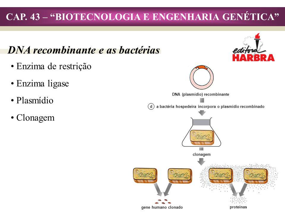 CAP. 43 – BIOTECNOLOGIA E ENGENHARIA GENÉTICA DNA recombinante e as bactérias Enzima de restrição Enzima ligase Plasmídio Clonagem proteínas gene huma