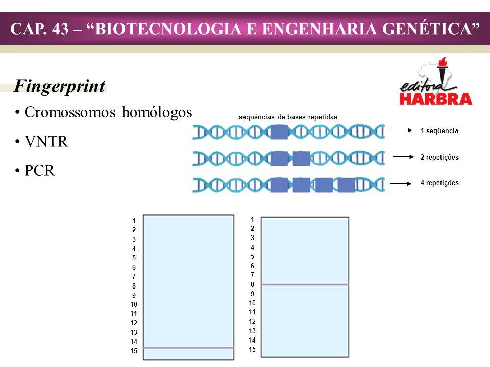 CAP. 43 – BIOTECNOLOGIA E ENGENHARIA GENÉTICA Fingerprint Cromossomos homólogos VNTR PCR seqüências de bases repetidas 1 seqüência 2 repetições 4 repe