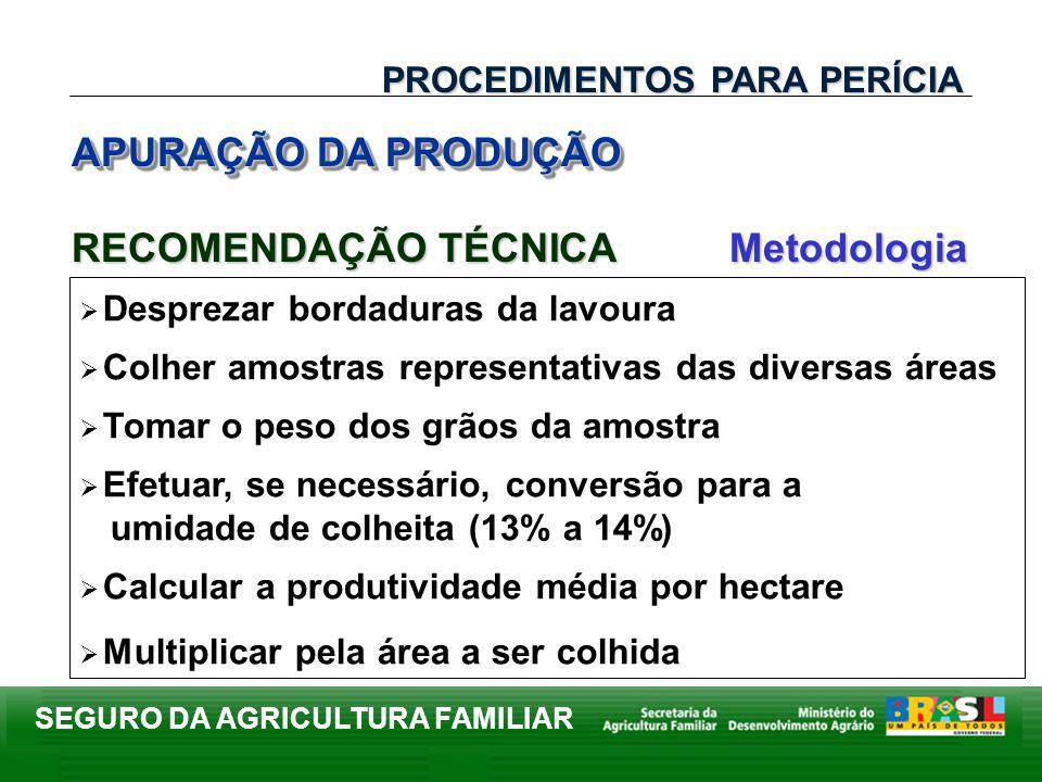 SEGURO DA AGRICULTURA FAMILIAR APURAÇÃO DA PRODUÇÃO PROCEDIMENTOS PARA PERÍCIA Desprezar bordaduras da lavoura Colher amostras representativas das div