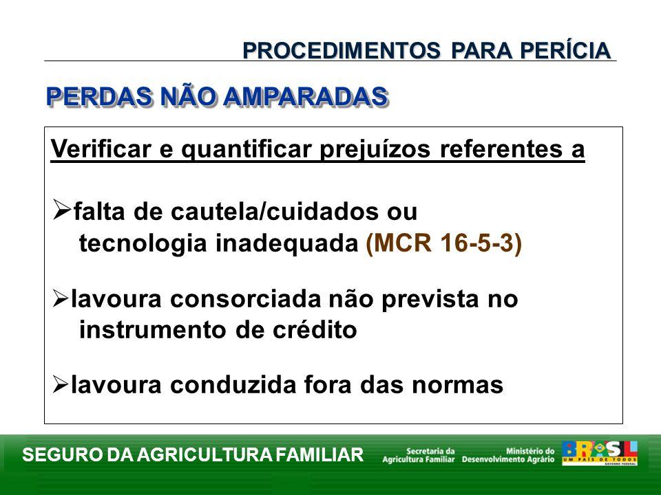SEGURO DA AGRICULTURA FAMILIAR Verificar e quantificar prejuízos referentes a falta de cautela/cuidados ou tecnologia inadequada (MCR 16-5-3) lavoura