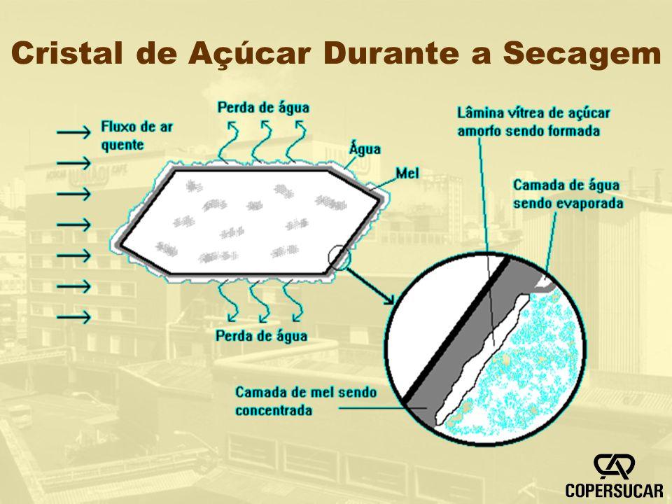 Cristal de Açúcar Durante a Secagem