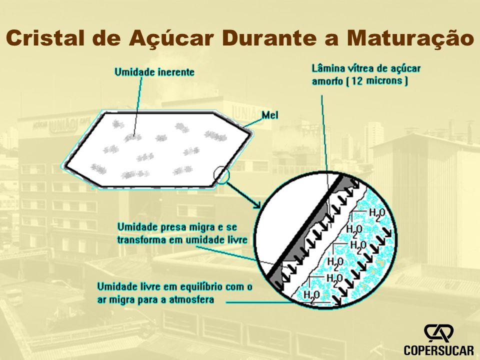 Cristal de Açúcar Durante a Maturação