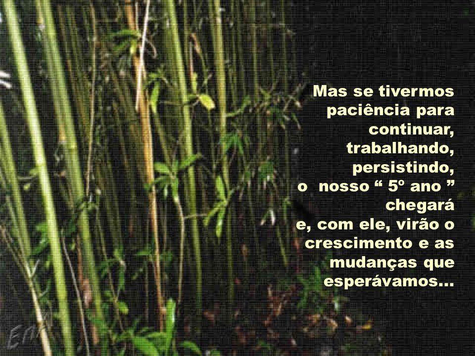 Muitas coisas na vida pessoal e profissional são iguais ao bambu chinês. Trabalhamos, investimos tempo, esforço, e, às vezes, parece-nos que não vemos
