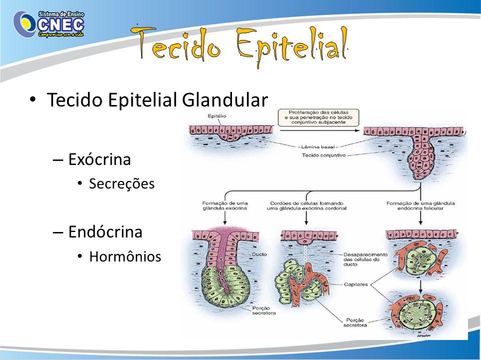 Tecido Epitelial Glandular – Exócrina Secreções – Endócrina Hormônios
