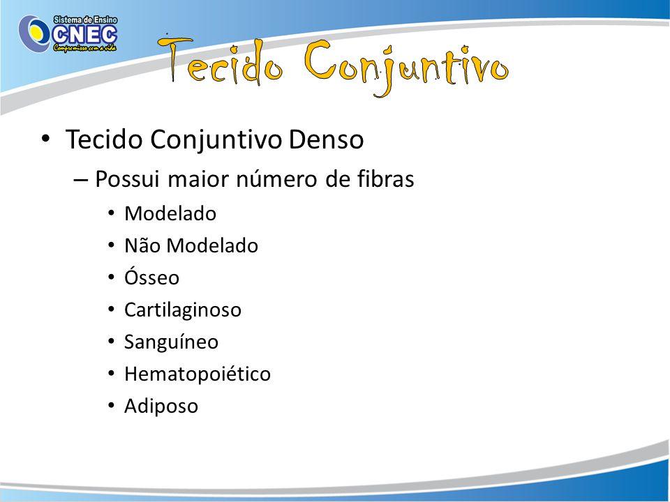 Tecido Conjuntivo Denso – Possui maior número de fibras Modelado Não Modelado Ósseo Cartilaginoso Sanguíneo Hematopoiético Adiposo