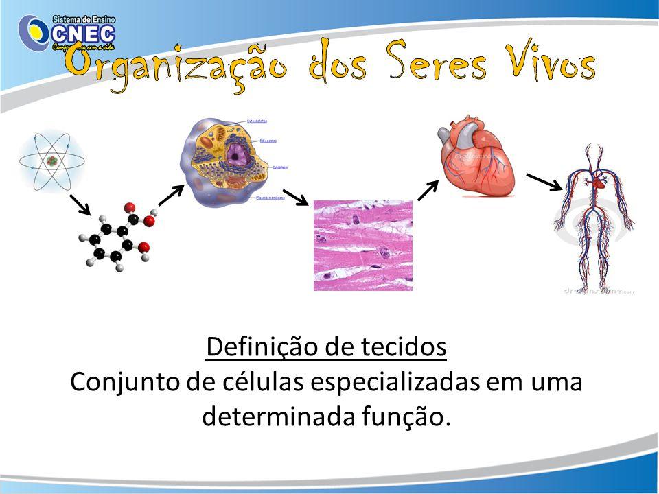Definição de tecidos Conjunto de células especializadas em uma determinada função.