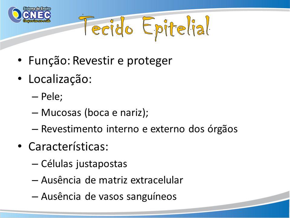Função: Revestir e proteger Localização: – Pele; – Mucosas (boca e nariz); – Revestimento interno e externo dos órgãos Características: – Células just