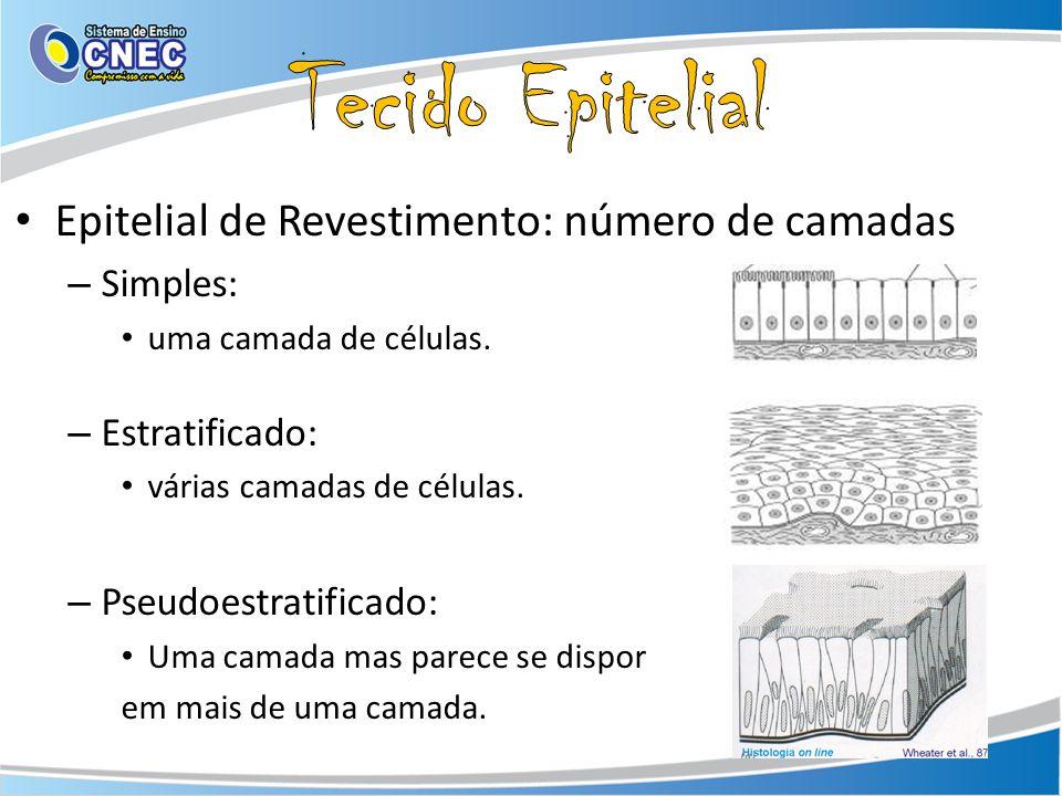 Epitelial de Revestimento: número de camadas – Simples: uma camada de células. – Estratificado: várias camadas de células. – Pseudoestratificado: Uma