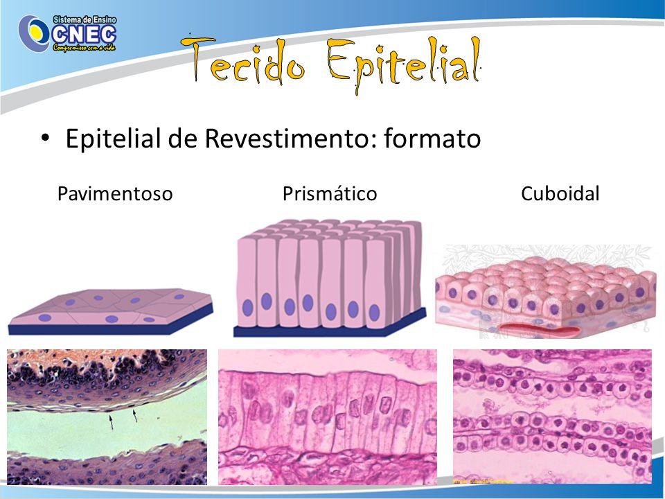 Epitelial de Revestimento: formato PavimentosoPrismáticoCuboidal