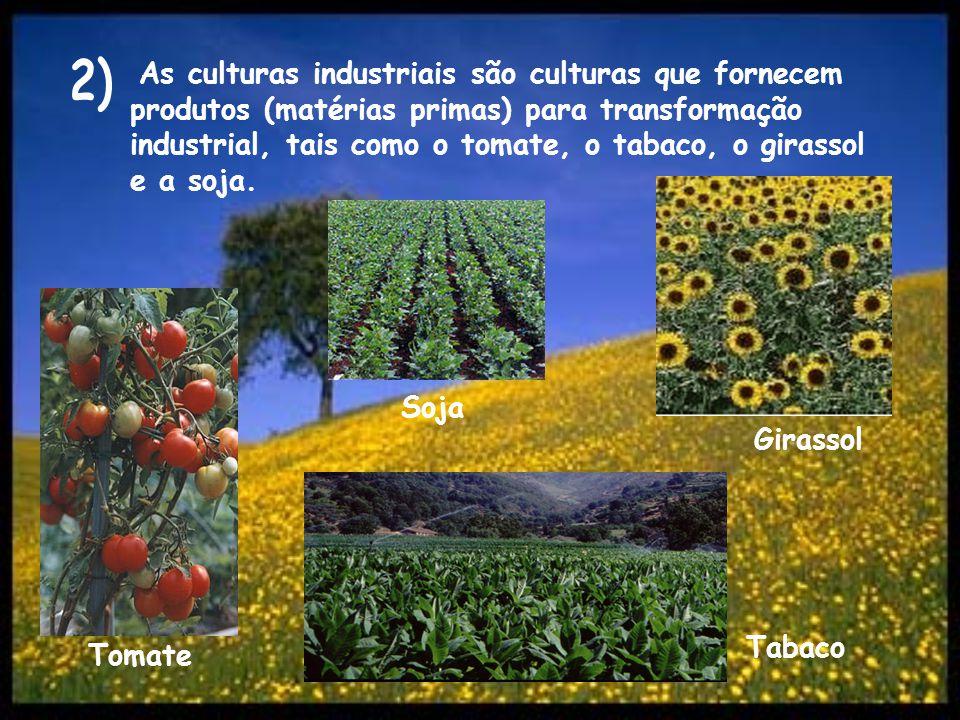 As culturas industriais são culturas que fornecem produtos (matérias primas) para transformação industrial, tais como o tomate, o tabaco, o girassol e