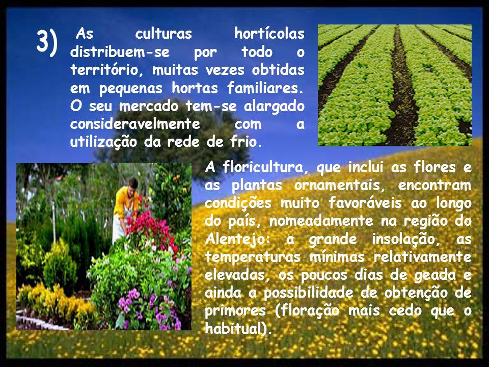 As culturas hortícolas distribuem-se por todo o território, muitas vezes obtidas em pequenas hortas familiares. O seu mercado tem-se alargado consider