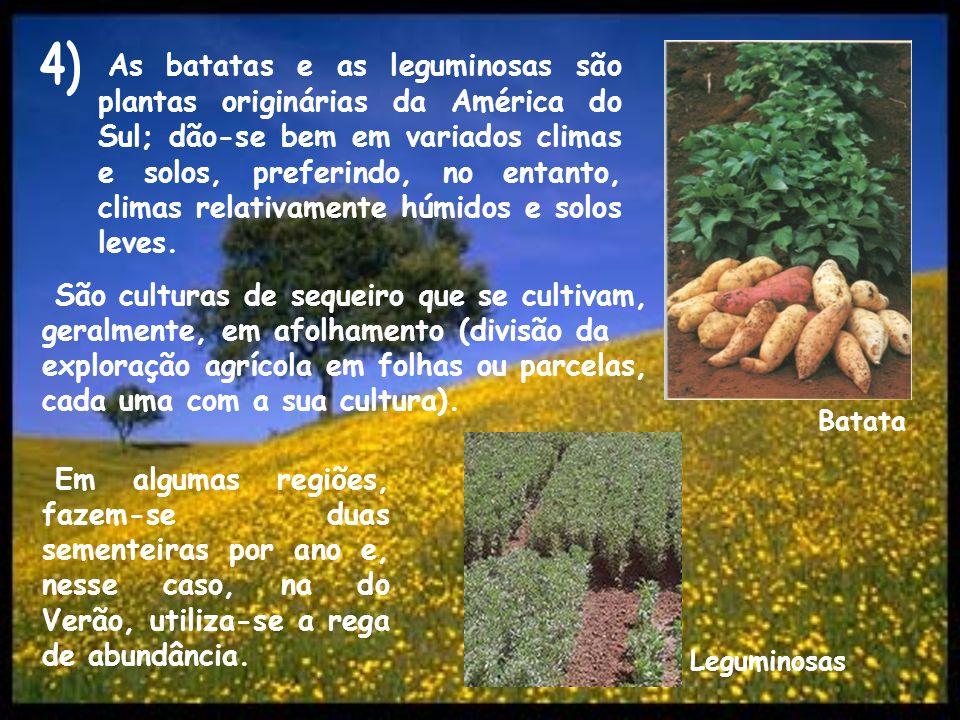 As batatas e as leguminosas são plantas originárias da América do Sul; dão-se bem em variados climas e solos, preferindo, no entanto, climas relativam