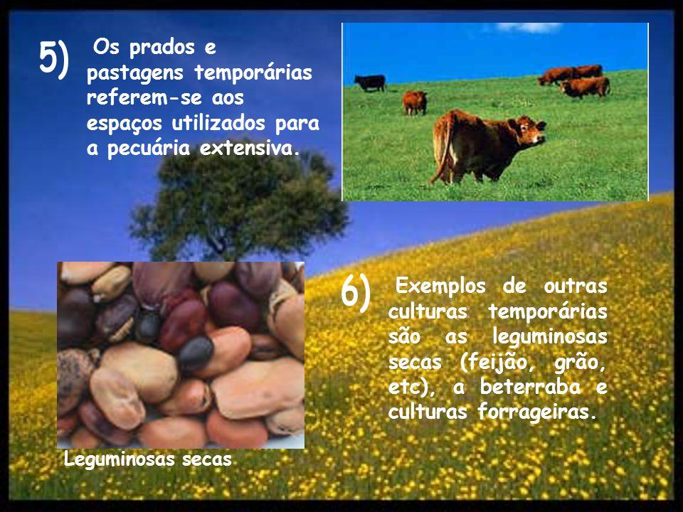 Os prados e pastagens temporárias referem-se aos espaços utilizados para a pecuária extensiva. Exemplos de outras culturas temporárias são as legumino