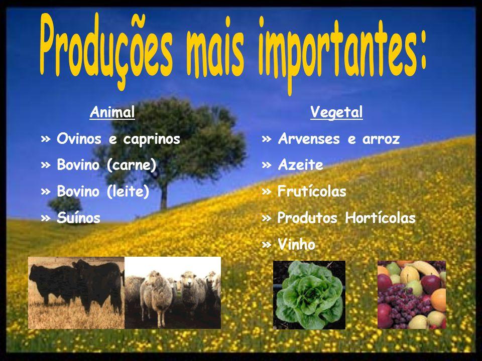 Animal » Ovinos e caprinos » Bovino (carne) » Bovino (leite) » Suínos Vegetal » Arvenses e arroz » Azeite » Frutícolas » Produtos Hortícolas » Vinho