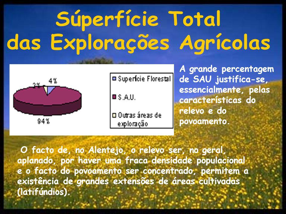 Factores geográficos: » Relevo aplanado; » Clima seco; » Chuvas irregulares; » Invernos mais frios; » Pobreza dos solos; » Fraca densidade populacional.