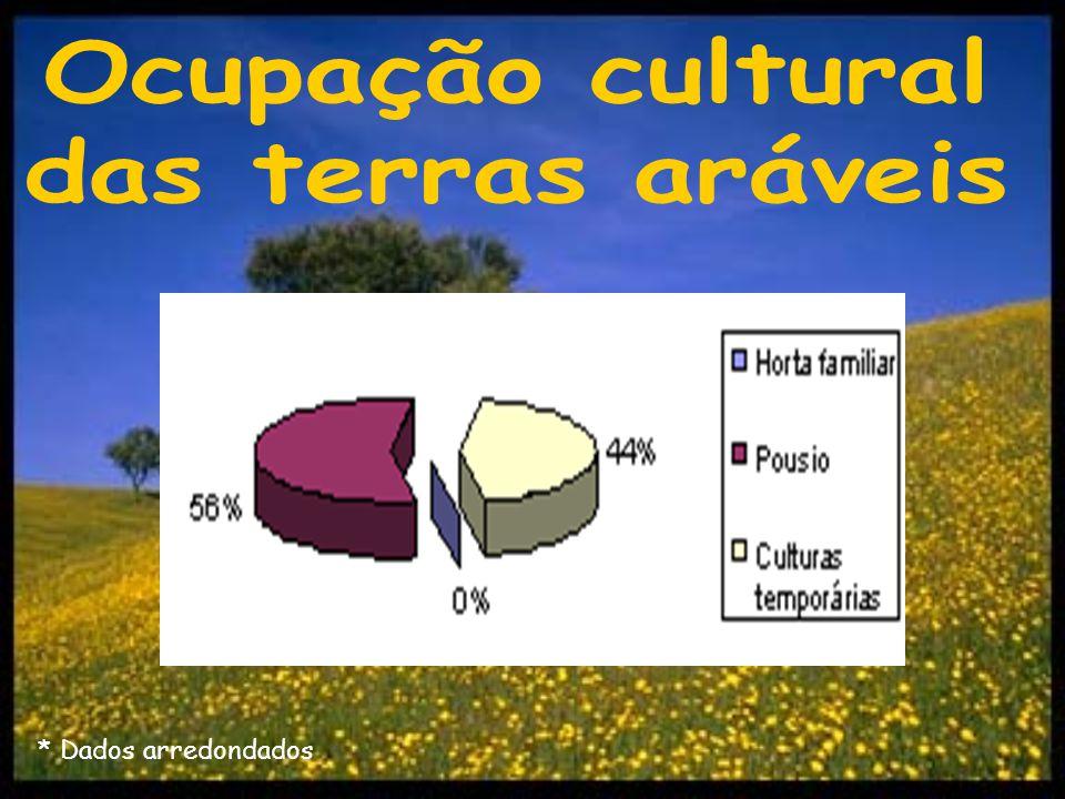 … Culturas temporárias.