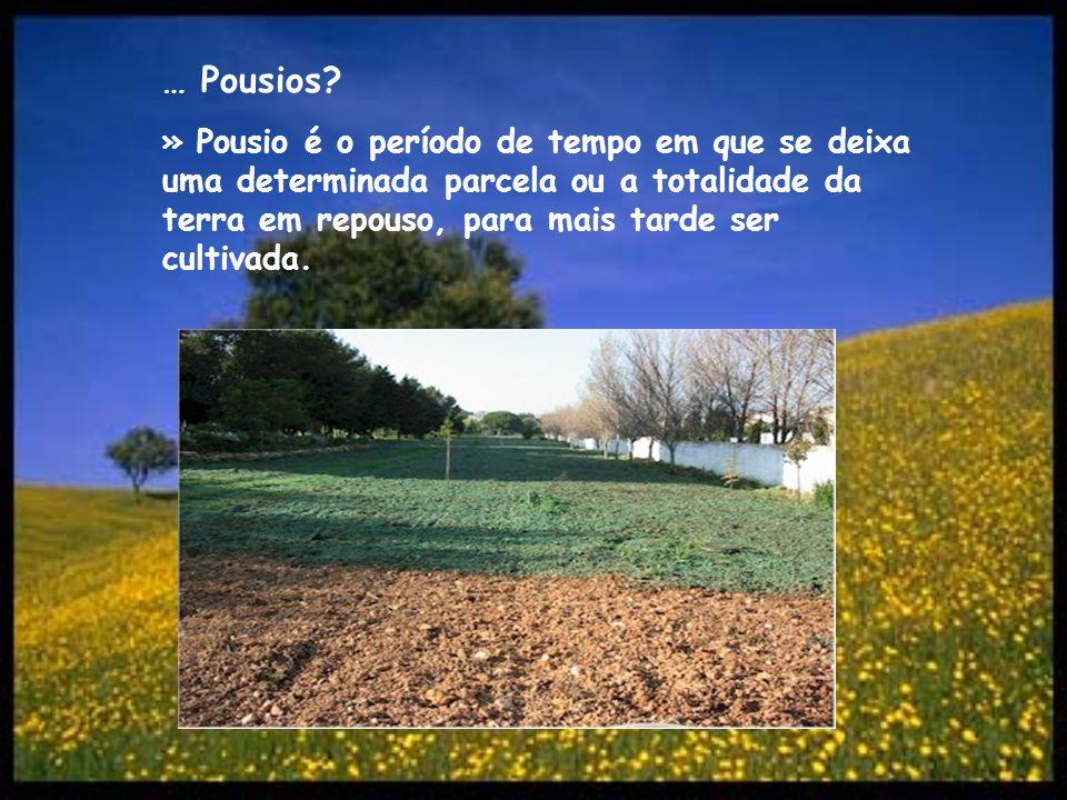 … Pousios? » Pousio é o período de tempo em que se deixa uma determinada parcela ou a totalidade da terra em repouso, para mais tarde ser cultivada.