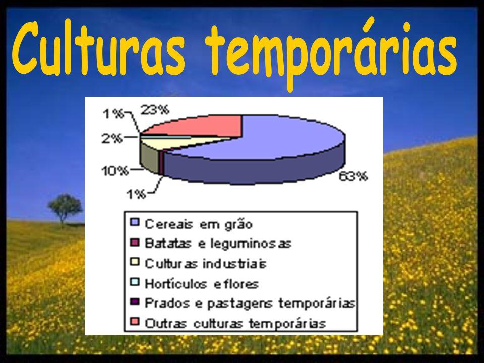 A cultura predominante (cereais em grão) é constituída por 4 tipos de cereais: o trigo (270665 toneladas), o milho (135782 toneladas), o arroz (67105 toneladas) e, finalmente, o centeio (400 toneladas) - dados de 1997.