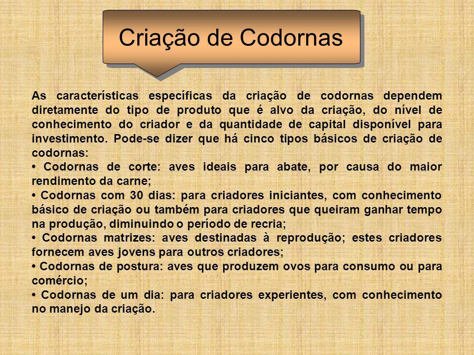 As características específicas da criação de codornas dependem diretamente do tipo de produto que é alvo da criação, do nível de conhecimento do criad