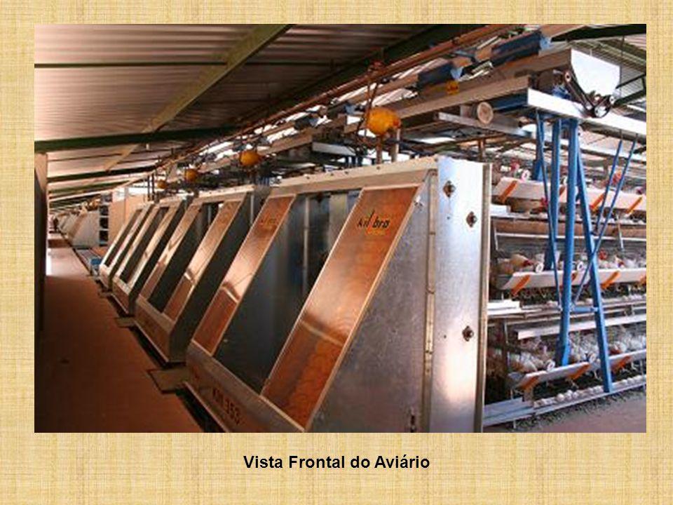 Sistema de coleta automática de ovos com fita 95 mm, importada, tracionado por motoredutor trifásico de 0,5 CV = 378 Watts.